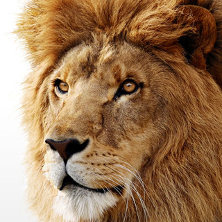 mac-os-lion.png